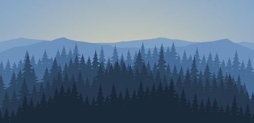 Pine forest at dawn landscape background