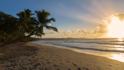 Sunset, paradise beach and palm trees, Martinique island.