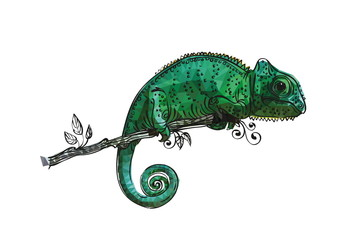 drawing of a chameleon bright green