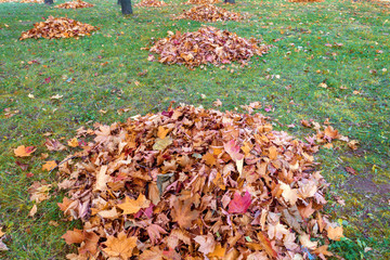 cleaning autumn leaves