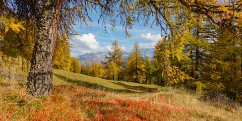 Panorama einer Landschaft im Herbst