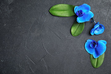 Beautiful tropical orchid flowers on black background, top view. Space for text