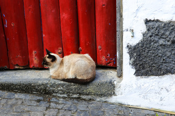 Siamese cat lying outside in front of a wooden door