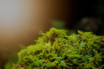 Green fresh moss with lateral ray of sun
