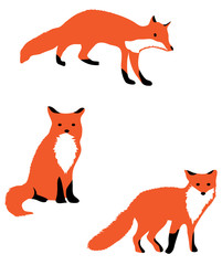 Vector Illustration Fox