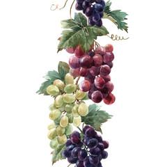 Fototapete - Watercolor grape vector pattern