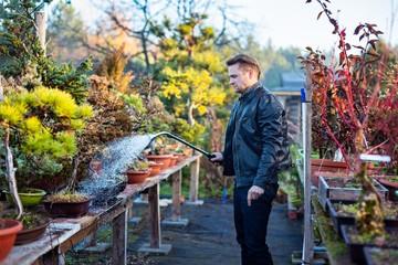 Young man bonsai artist watering his bonsai trees