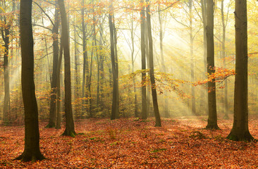 Morning in the autumn forest