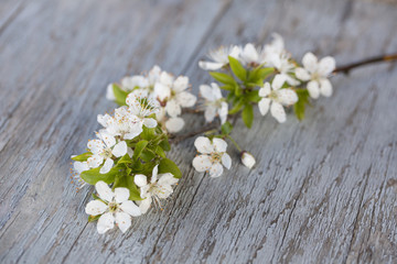 White Cherryblossom On Wood