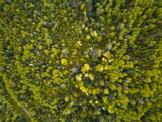 Aerial view from a drone looking down at the dense trees in the rain forests of the American Pacific Northwest