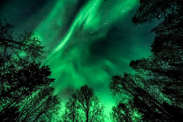 Unbelievable, in natural colors Aurora Borealis - The northern lights above forest ( tree line )