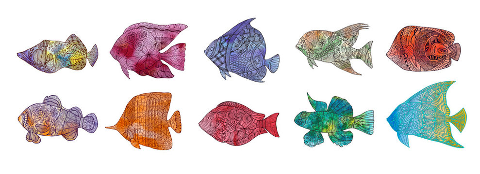 set of colored hand drawn stylized fish with doodle, vintage elements with waved pattern frame. . Isolated on white.