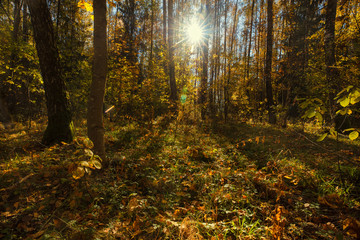 Autumn landscape with sunshine wading through dense forest