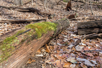 old fallen tree overgrown with moss in the autumn forest