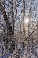 Trees under snow