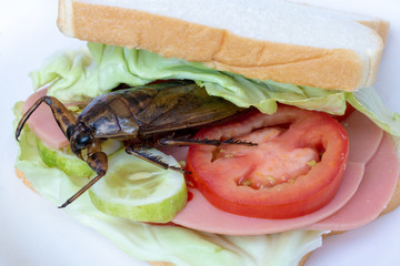 Close up sandwich with fried cockroach, fresh vegetables and salami. Toasted bread with edible insect.