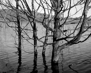 Submerged Trees