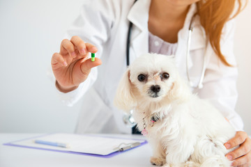Puppy with doctor