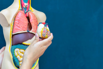 Medical treatment of people,Captures heart model in order to learn.