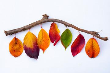 多彩に色づいた紅葉と小枝や木ノ実のコラージュ写真シリーズ