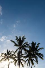 Palmen vor blauem Hintergrund, copy space, Vertikal
