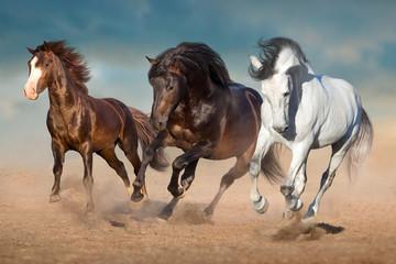 Wall Mural - Horse herd free run in desert dust