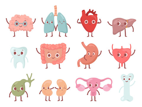 Healthy biological organ. Smiling lung, happy heart and funny brain. Smile organs cartoon isolated character vector set