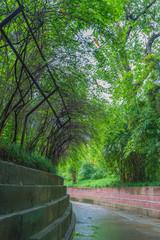 緑に覆われた小道