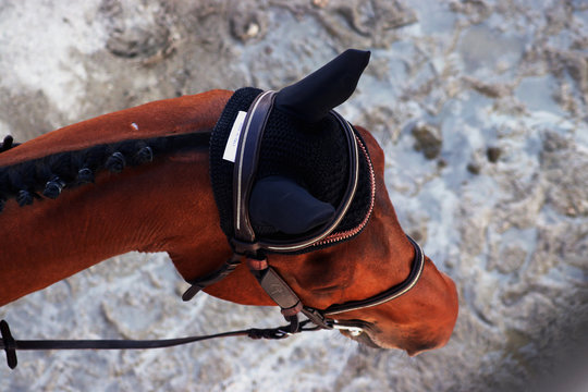 Cheval vu du haut de Lamotte