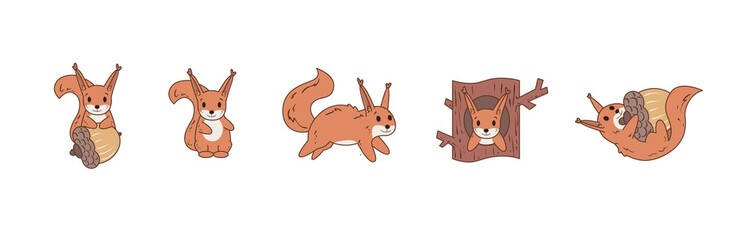 Colourful comic squirrel playing with nut and jumping around. Set of icons. Flat vector illustration. Isolated on white background.