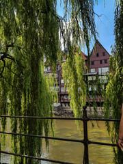 The river Ilmenau with weeping willows