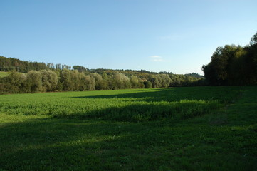 Green summer field with a forest in the background