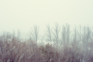 Winter landscape - snow storm, snow covered trees and black birds
