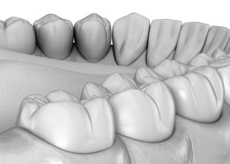 Mandibular human gum and teeth anatomy. Medically accurate tooth 3D illustration