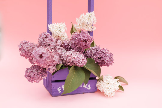 Lilac flowers bunch in a violet wooden basket over pink background. Beautiful violet Lilac flower still life Easter border design on wooden table