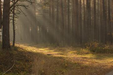 Obraz Leśna droga jesienią. - fototapety do salonu