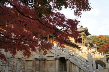autumn in bulguksa temple