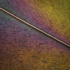 a frame full of stripes (HMM !)