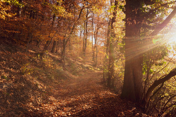 Beautiful, sunny autumn in the forest