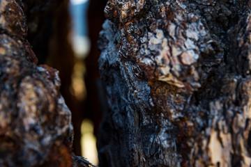 close up macro tree bark bokeh