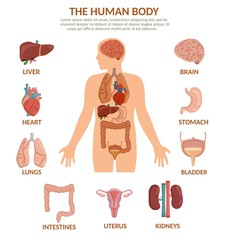 Infographics of human organs cartoon vector illustration