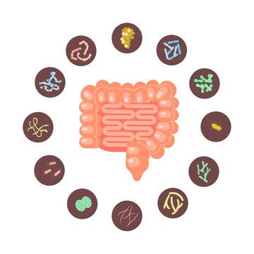 Infographic of Intestines with microbiota