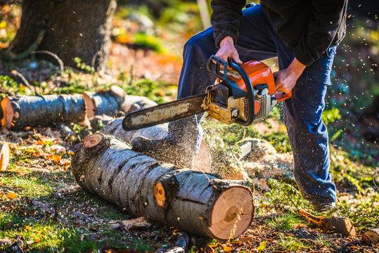 bûcheron entrain de couper un arbre avec une tronçonneuse