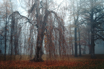 Gruseliger Baum bei Nebel