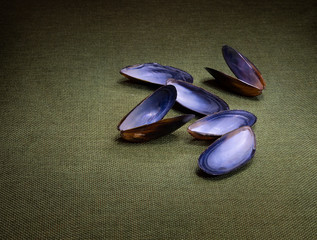 Mussel shells on green still life, light painting.