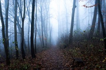Laub bedeckter Wanderweg führt in einen mystischen Nebel Wald. Bäume und Äste sind sehr kahl.