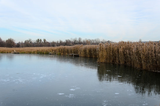 The first thin ice on the lake