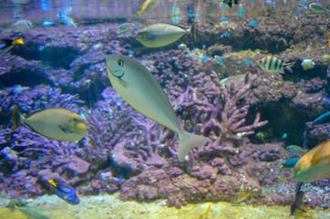 Fish in salt water aquarium
