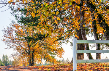 Autumn landscape of sunlit foliage of trees behind fence on the side of the road