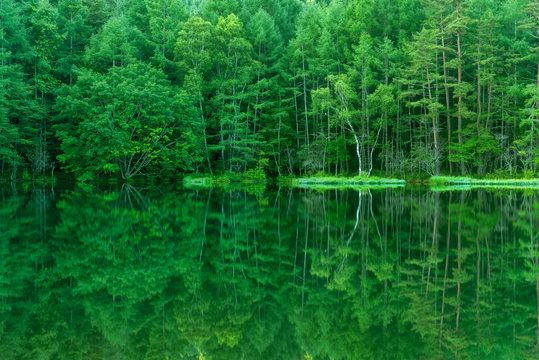 静かな森の中の湖畔 御射鹿池 日本長野県茅野市